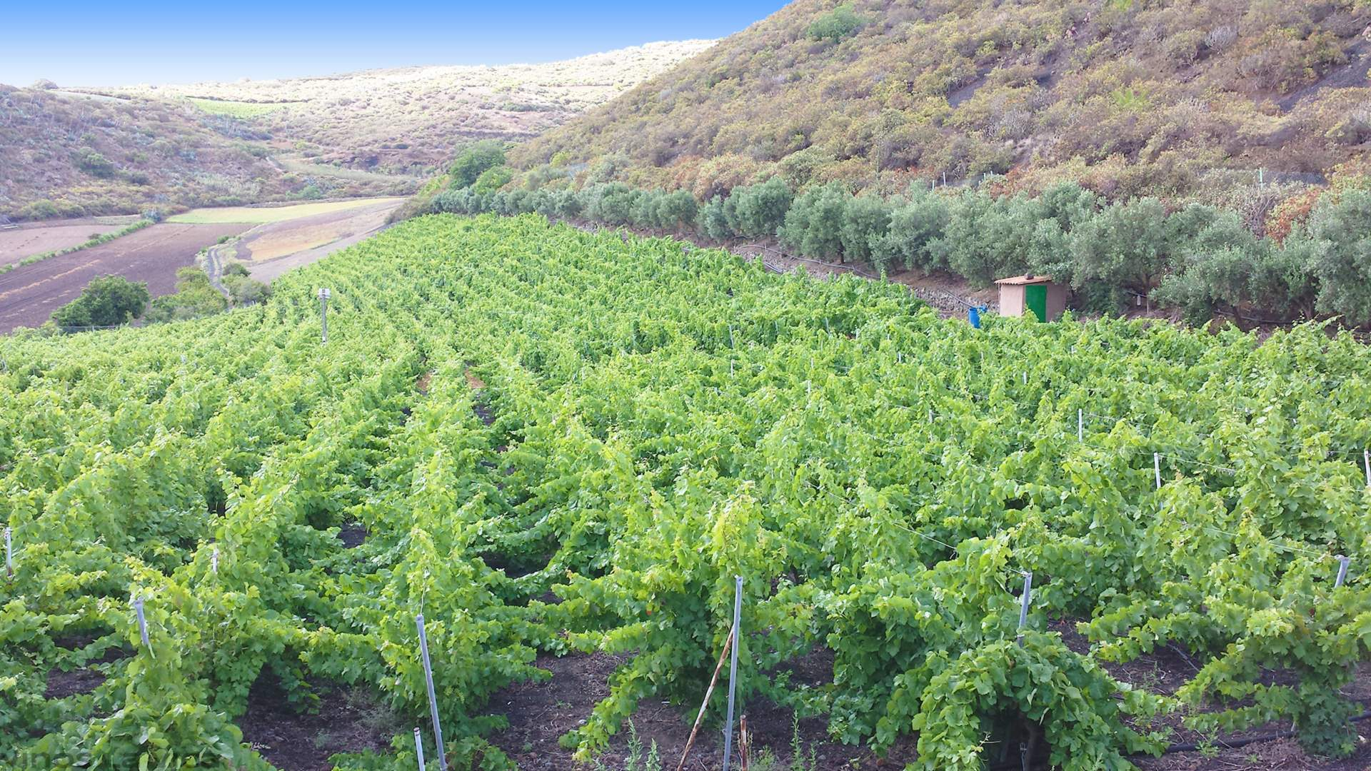 vinos-la-vica-masmediacanarias-slider-3